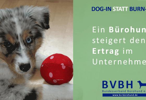 Infocard: Bürohund – Steigert den Ertrag