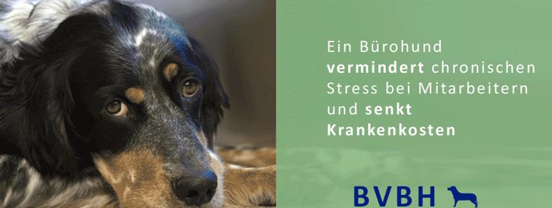 Infocard: Bürohund – Senkt Krankenkosten