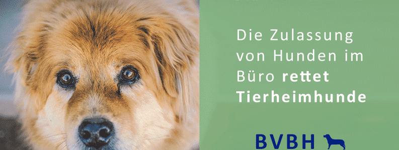 Infocard: Bürohund – Rettet Tierheimhunde