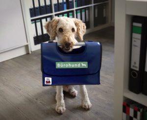 Bürohundtasche Ernl